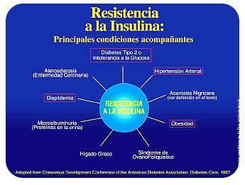 Resistencia a la insulina e Hiperinsulinemia | cristormor